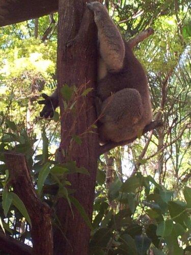 Alma_Park_Zoo_Brisbane